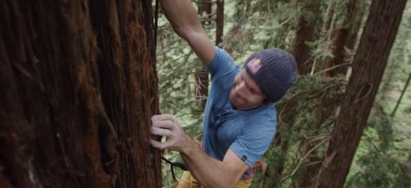 grimpe dans les arbres avec Chris Sharma