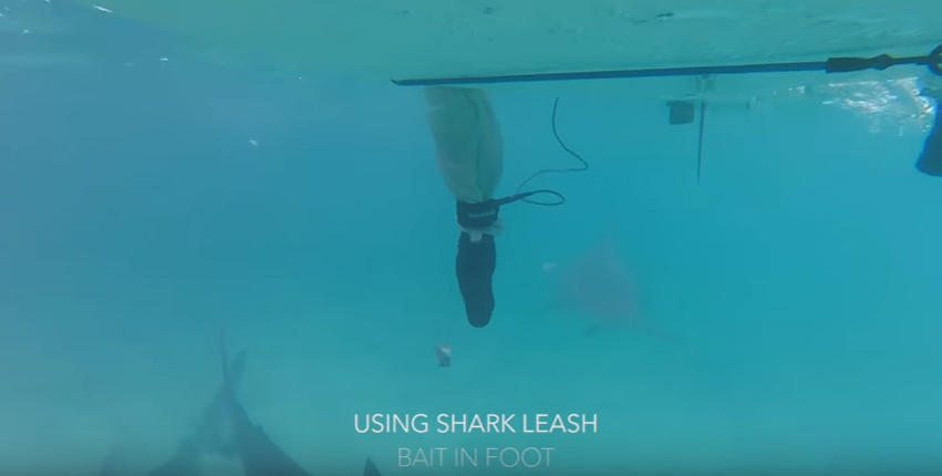 Surf : Le Leash anti requin
